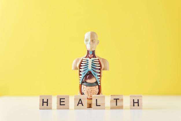 Maniquí de anatomía humana con órganos internos y la palabra salud sobre un fondo amarillo. concepto de salud médica