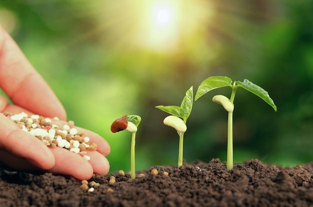 Mano agrícola que cultiva la planta del fertilizante que crece paso en suelo en jardín
