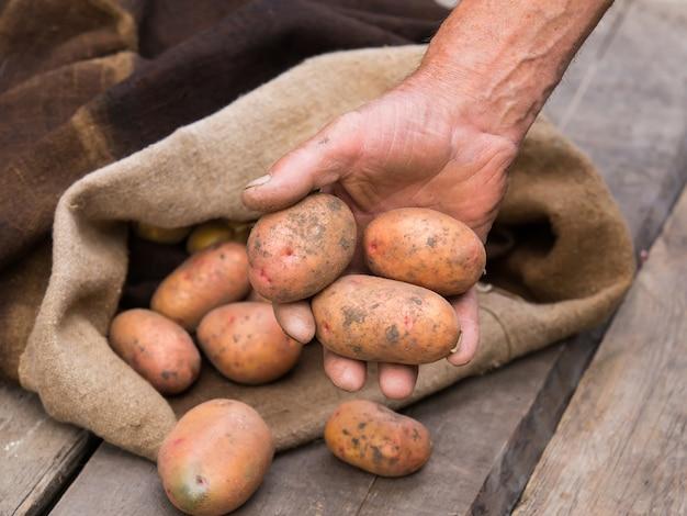 Mano de anciano con patatas frescas cosechadas con tierra todavía en la piel