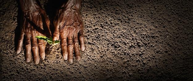 La mano de un anciano plantando un árbol, el concepto de preservar la naturaleza para el futuro de la humanidad. concepto de rse