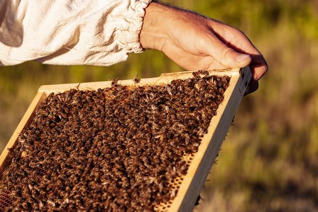 La mano del apicultor está trabajando con abejas y colmenas en el apiario