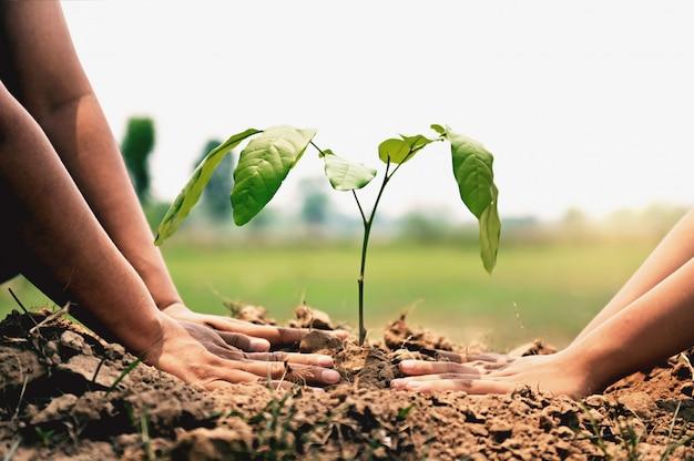Mano ayudando a plantar árboles en el jardín para salvar la tierra. concepto de medio ambiente