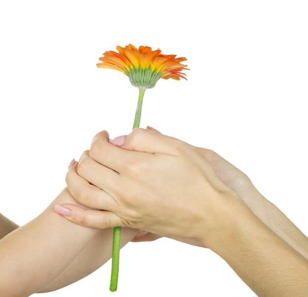 Mano de bebé sosteniendo una flor