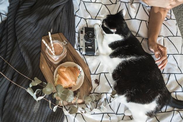 Mano de cultivo acariciando el gato cerca de la cámara y la comida del desayuno