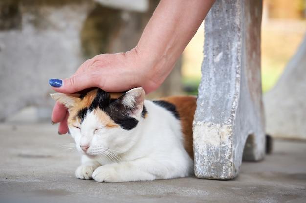 Mano femenina acariciando un gato tricolor sentado en la acera