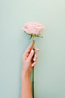 Mano femenina sosteniendo delicada rosa