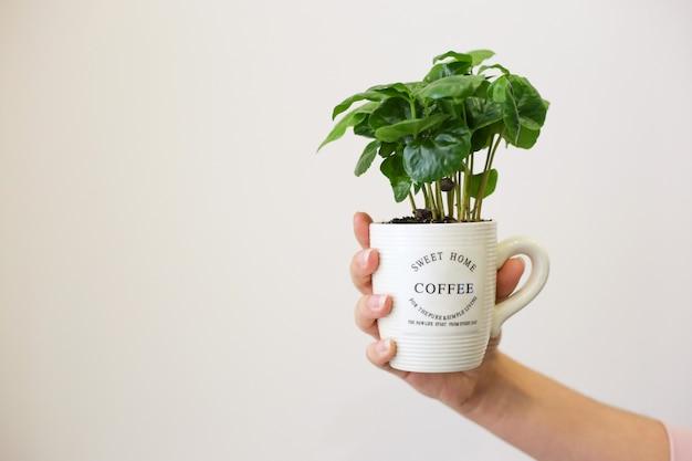 Mano femenina sosteniendo una taza blanca con granos de café germinados