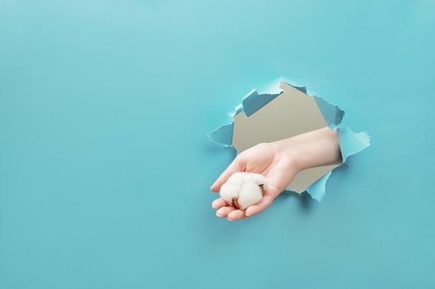 Mano femenina sostiene una flor de algodón a través de un agujero rasgado en papel