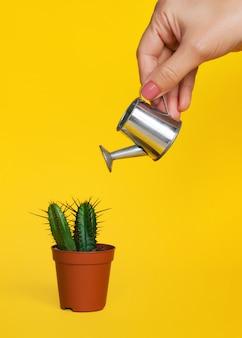 Mano femenina sostiene una regadera y riega un pequeño cactus decorativo en una maceta.