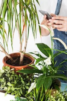 Mano de la floristería usando un celular cerca de plantas en macetas