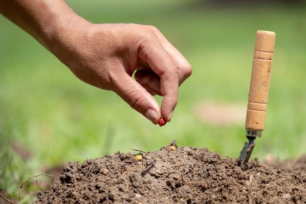 Mano de hombre plantando una semilla en el suelo y ahorre el concepto