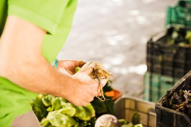 La mano del hombre que sostiene la verdura de raíz en mercado