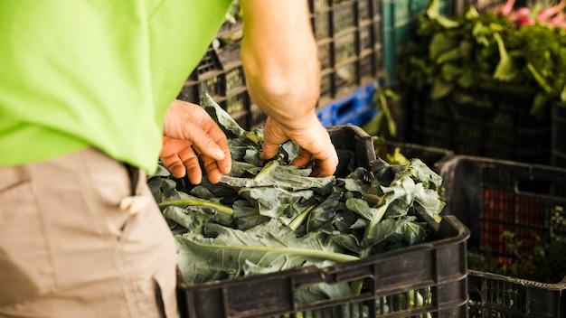 La mano del hombre sosteniendo verduras de hoja en el mercado