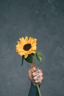 Mano del hombre tatuado que sostiene el girasol contra el fondo gris