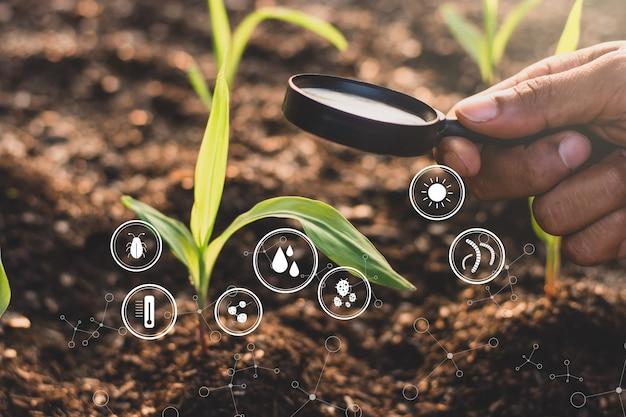 La mano de un hombre está usando una lupa para iluminar una plántula de maíz, y los íconos de la tecnología están por todas partes