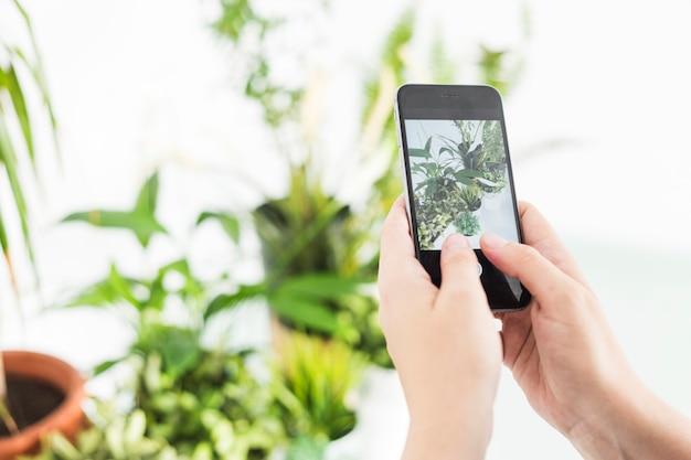 Mano humana tomando fotografía en plantas en maceta en celular
