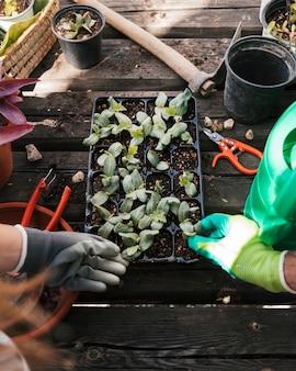 Mano de jardinero masculino y femenino tocando la plántula en el cajón negro
