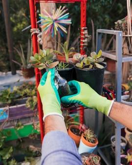 La mano del jardinero de sexo masculino que sostiene la planta del cactus en estante rojo