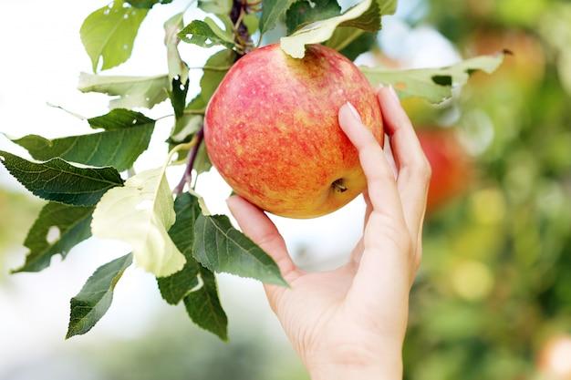 Mano y una manzana