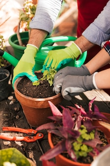 Mano masculina y femenina del jardinero con guantes plantando la plántula