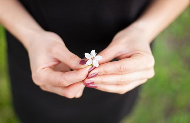 Mano de mujer con una flor de primavera. flor de sakura