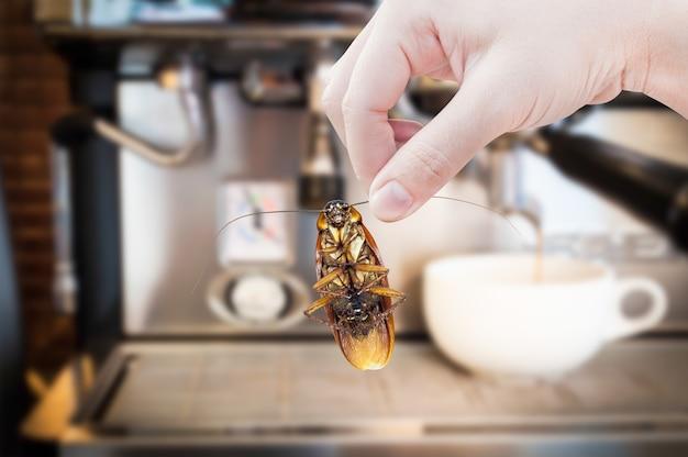 Mano de mujer sosteniendo cucaracha en máquina de café
