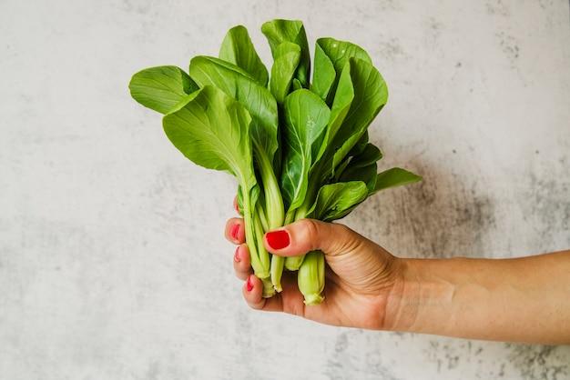 Mano de mujer con verduras de acelgas