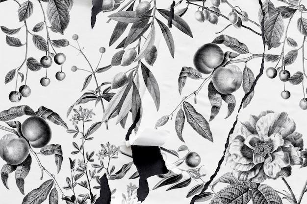 Mano de naturaleza bw dibujada con estilo de papel rasgado