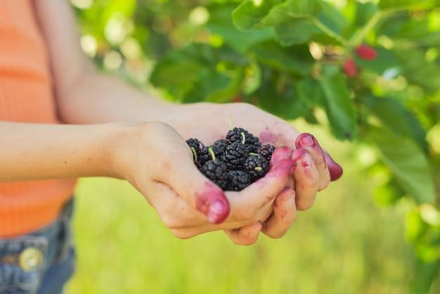 Mano del niño con bayas maduras moras, jardín con moreras