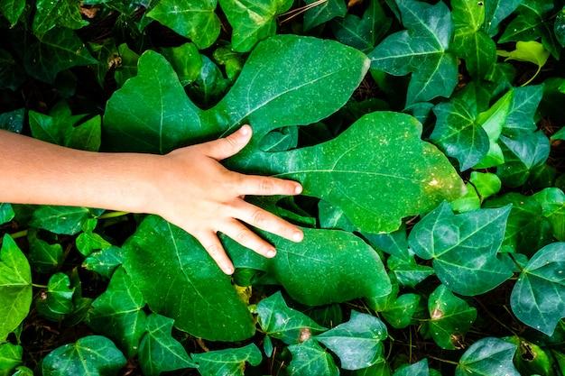 La mano del niño en una hoja verde grande, con fondo de hojas verdes naturales, concepto de ecología.