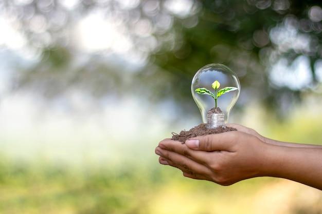Mano de personas sosteniendo bombillas de bajo consumo y pequeños árboles plantados en bombillas de ahorro de energía y concepto ambiental.