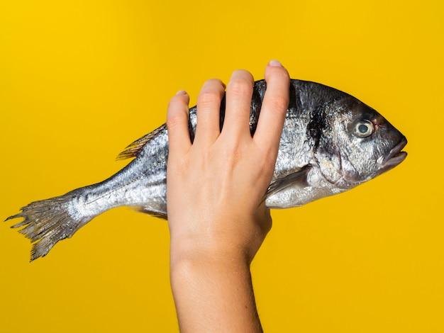 Mano con pescado fresco sobre fondo amarillo