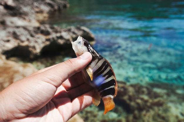 La mano del pescador que sostiene pescados cerca del mar