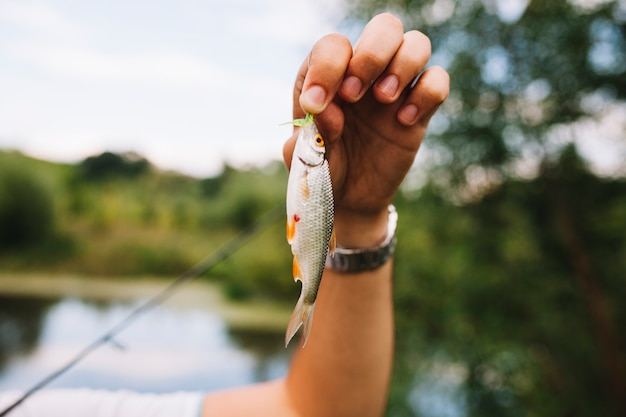 La mano del pescador sostiene peces capturados recientemente