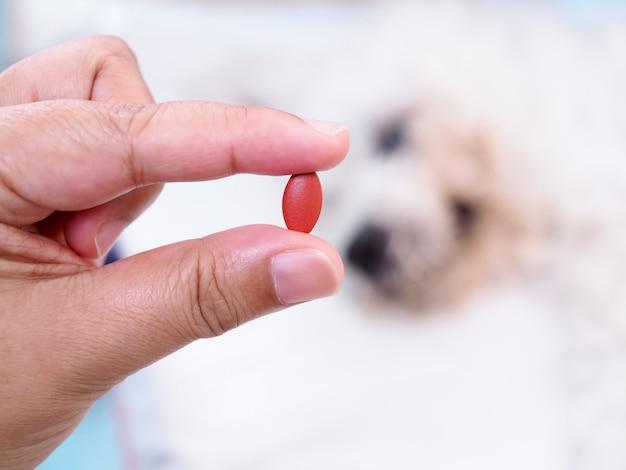 Mano con píldora o droga de perro enfermo, medicación de tratamiento de enfermedad para mascota.