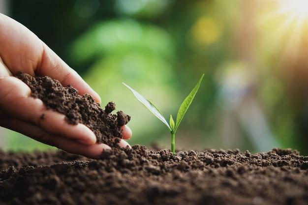Mano plantando árboles jóvenes en la naturaleza en la luz de la mañana
