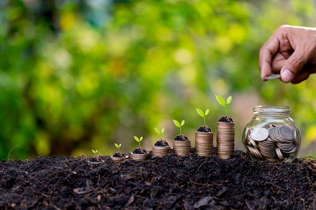 Mano poniendo monedas de dinero como gráfico de crecimiento, planta brotando del suelo con fondo verde.