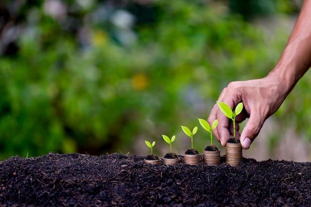 Mano poniendo monedas de dinero como gráfico de crecimiento, planta brotando del suelo