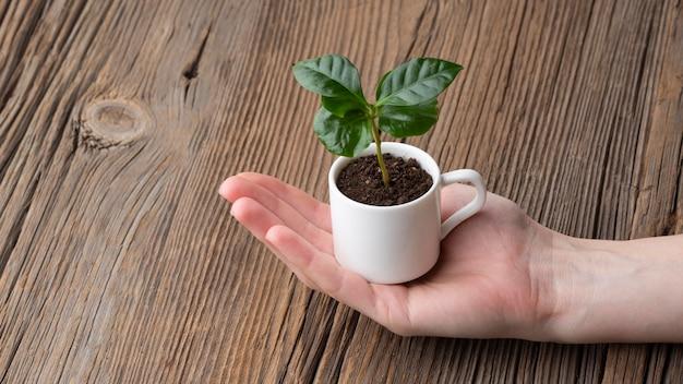 Mano de primer plano sosteniendo una taza pequeña con planta