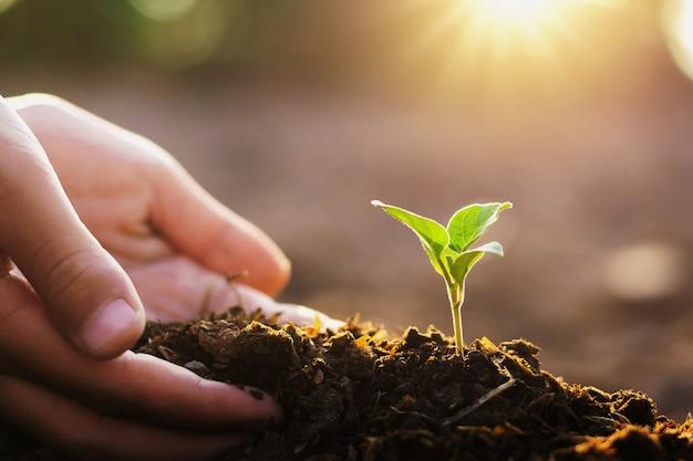 Mano que planta el pequeño árbol y la salida del sol en jardín. concepto mundo verde