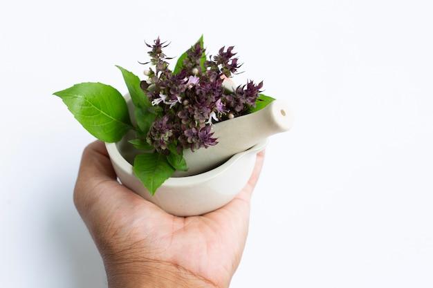 Mano que sostiene albahaca dulce con flores de color púrpura en mortero de porcelana sobre fondo blanco.