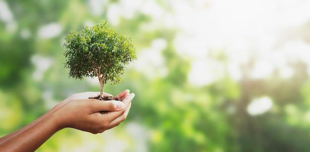 Mano que sostiene el árbol. concepto eco day