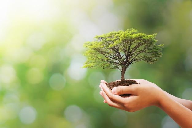 Mano que sostiene el árbol en la naturaleza verde de desenfoque. día ecológico de la tierra