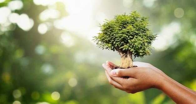Mano que sostiene el árbol en verde desenfoque con sunshine.eco concept