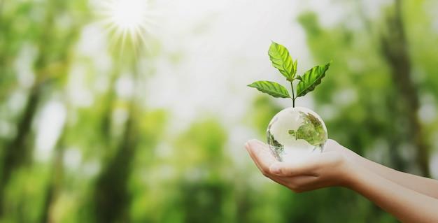 Mano que sostiene la bola del globo de cristal con el crecimiento del árbol y la naturaleza verde desenfoque de fondo