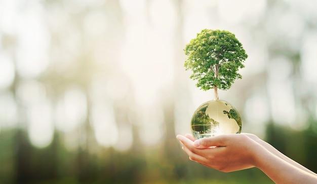 Mano que sostiene la bola del globo de cristal con el crecimiento de árboles y la naturaleza verde