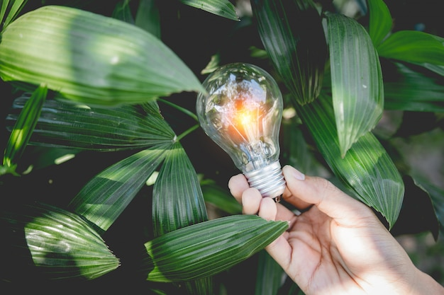 Mano que sostiene la bombilla, las fuentes de energía para energías renovables, naturales y el concepto del mundo del amor.
