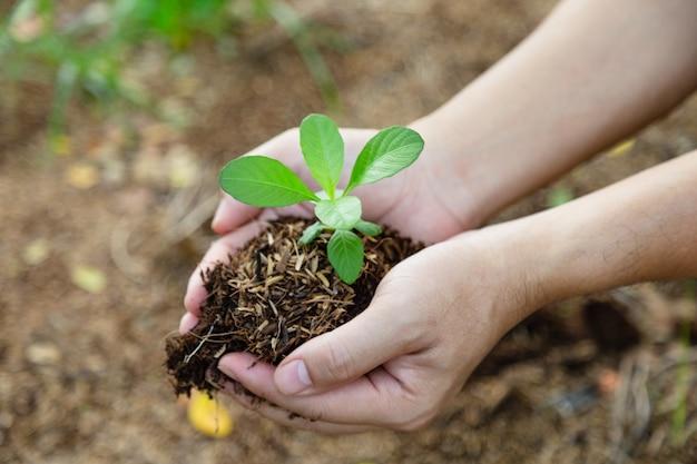 Mano que sostiene el brote para el crecimiento de la naturaleza