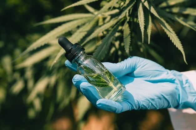 Mano que sostiene el extracto de aceite de cannabis sativa esencial de hojas de marihuana para la planta de naturaleza medicinal a base de hierbas.
