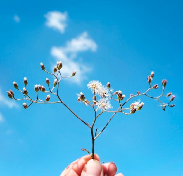 Mano que sostiene la flor recogiendo el concepto de refresco de la naturaleza